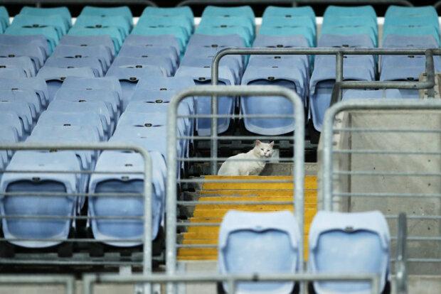Кошка, фото: Getty Images