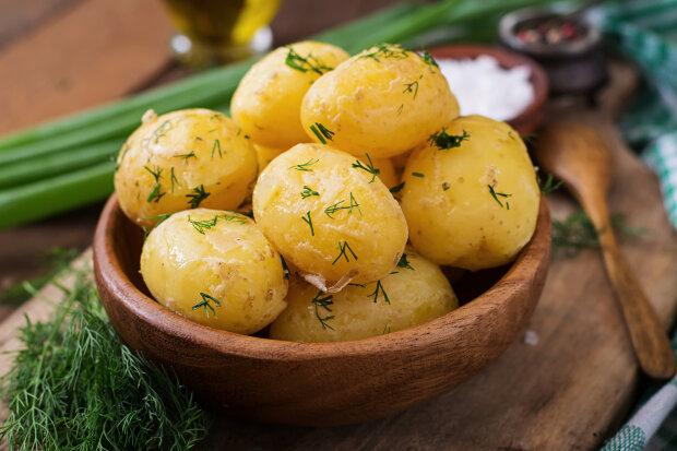 Молодой картофель с укропом: как приготовить ее правильно и довести гостей до блаженства