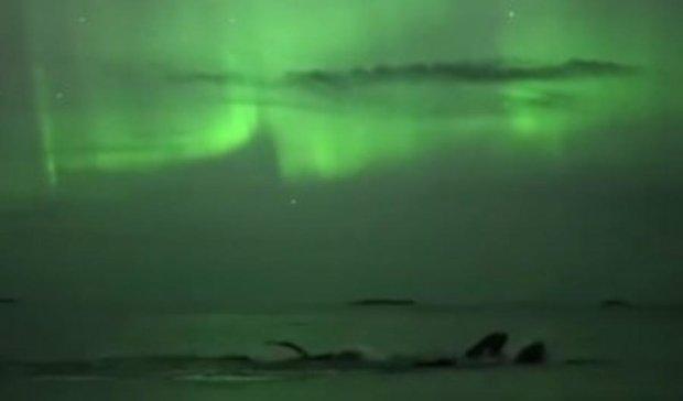 Норвезький оператор зняв купання китів під північним сяйвом (відео)