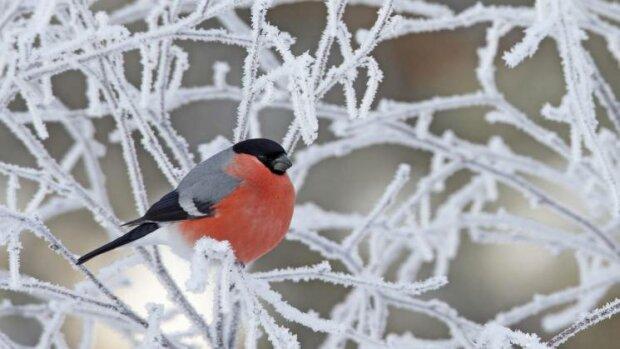 Зима придет в Винницу с солнцем и морозом: синоптики обнадежили прогнозом на 1 декабря