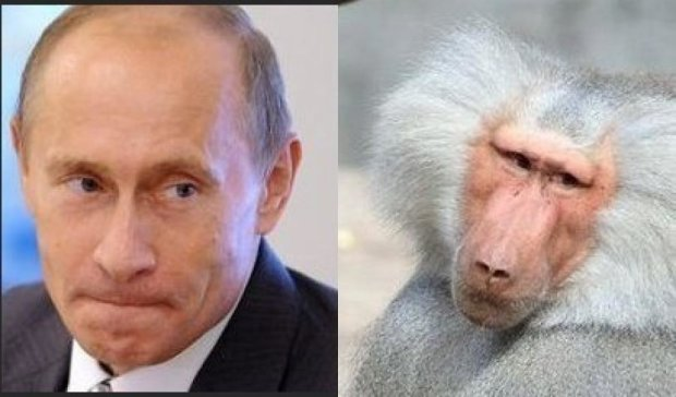 Блогер з РФ назвав Путіна мавпою