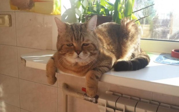 Грибы не пройдут: кот ценой жизни спас бабушку и внучку