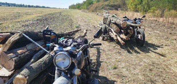 """У Запорізькій області затримали зловмисника з """"запасами на зиму"""" - за крок від міни"""