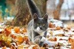 Котик і перші заморозки, Гродненская правда