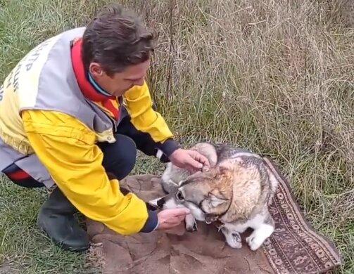 Зоозахисники б'ють на сполох: у притулку собаку без лап перетворили на живу приманку