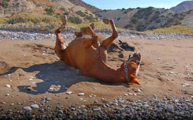 Пекельна спека не перешкода: одесита ледь не побили за знущання з коня