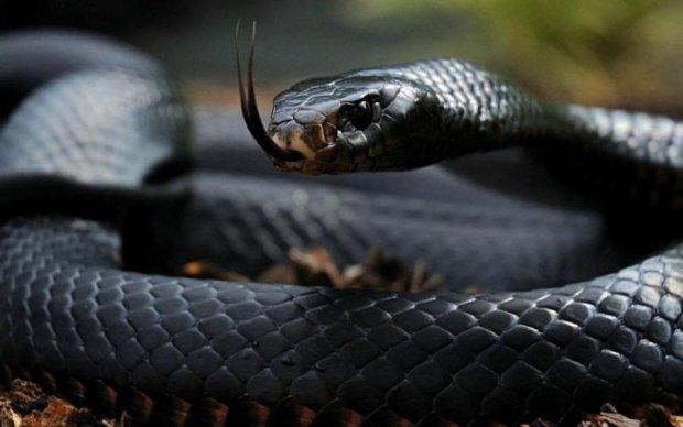 Из леса в реанимацию: украинцев массово атакуют змеи