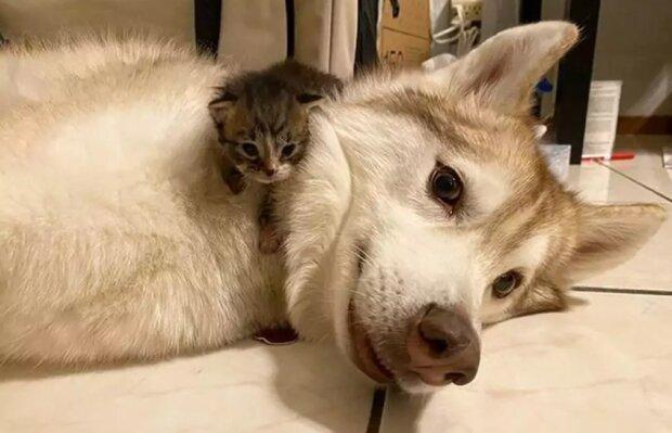 Собака з кошенятами, фото: Pikabu