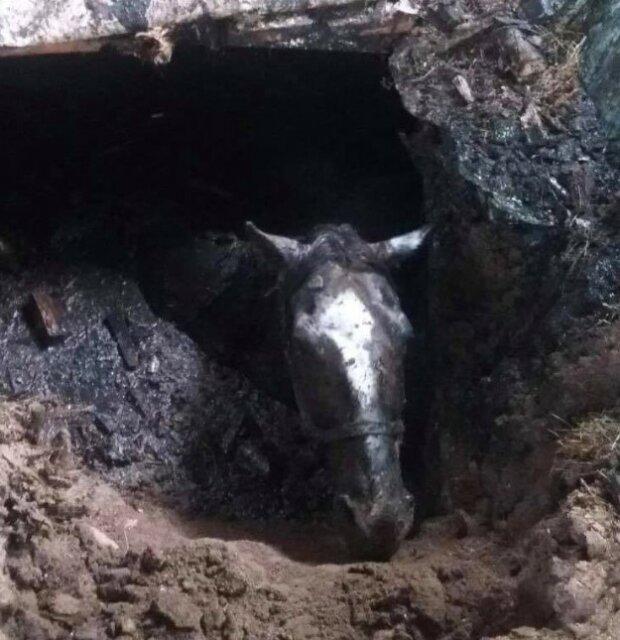 Кінь у вигрібній ямі, скріншот