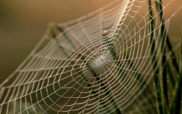 Исследователи научились улучшать пауков