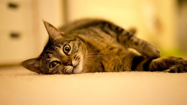 Кумедна фотодобірка котів, які виробляють неймовірні речі: коли тварини живуть за своїми правилами