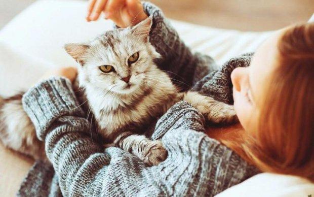 Ученые раскрыли секрет кошачьих лап