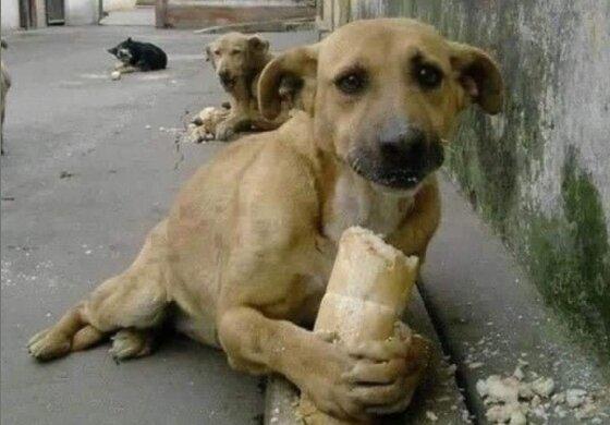 Бездомний собака, фото facebook