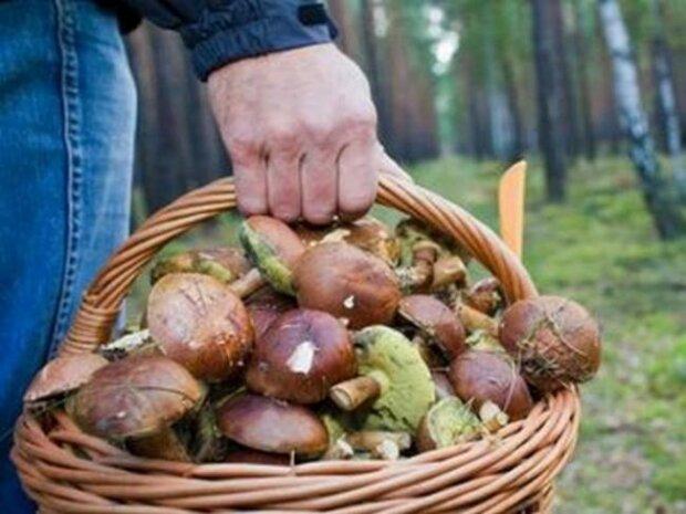 Ось вам і грибочки: на Прикарпатті отруїлися десятки людей, у ліс - ні ногою