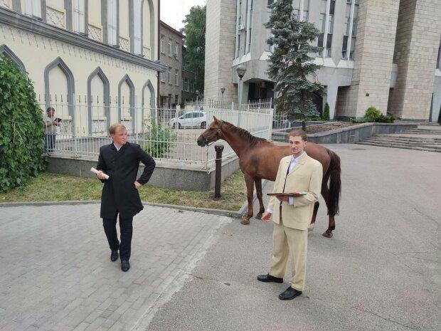 Кінь у мерії, фото: Facebook