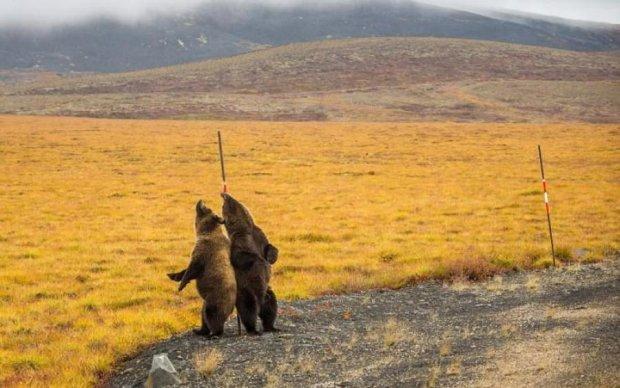 Труться ведмеді: розваги клишоногих вразили туриста