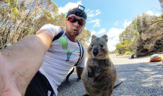 Австралиец сделал селфи с короткохвостым кенгуру