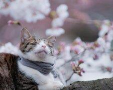 Котик, фото з вільних джерел