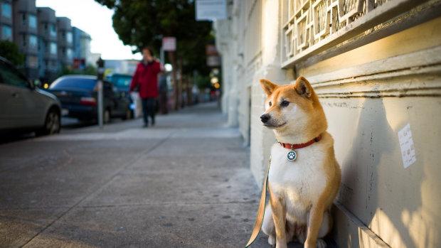 Відданий пес вже 80 днів чекає господарку на місці її загибелі. У мережі показали зворушливе відео, неможливо не заплакати