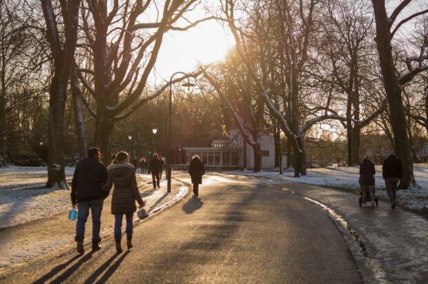 """Тернополяне вывалили горы иголок в парке, там гуляют наши дети: """"Так начался новый год"""""""