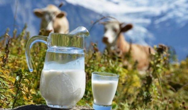 Нові закупівельні ціни на молоко не діятимуть