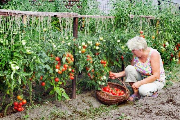 Ученые нашли смертельную опасность в любимом овоще украинцев