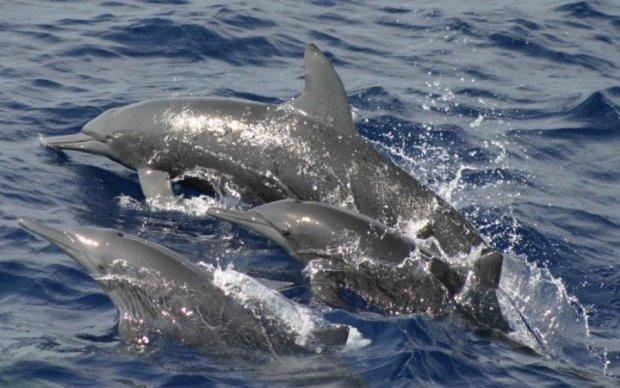 Дельфины сбежали от оккупантов в украинские реки