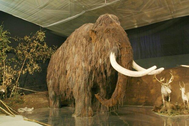 Ученые выяснили, что на самом деле погубило мамонтов: дожили до строительства пирамид, а затем исчезли