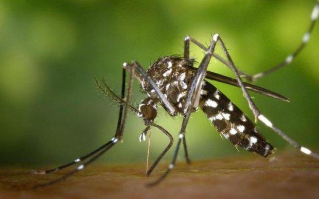 Сезон відкрито: як боряться з комарами в різних країнах