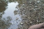 Річка в Криму, фото з соцмреж