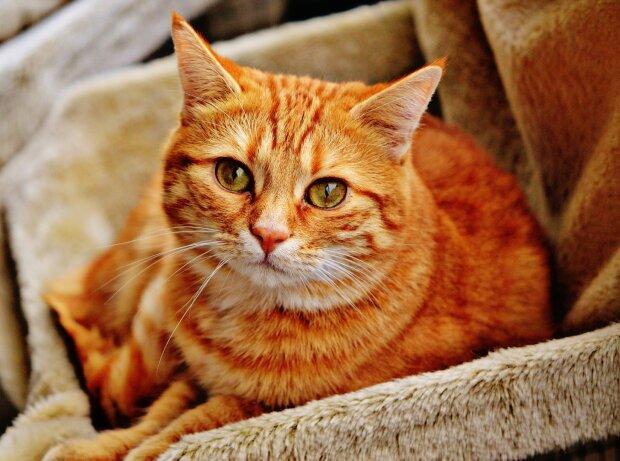 Домашний кот, фото Pxhere
