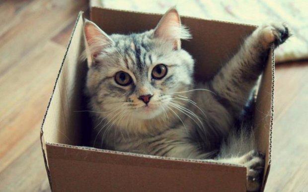Вчені пояснили любов котів до коробок