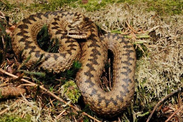 Змея, фото: свободный источник