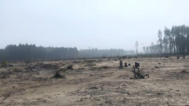 Янтарный край, фото: youtube