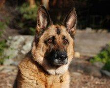 Викинутий на вулицю пес знайшов роботу в Нацгвардії