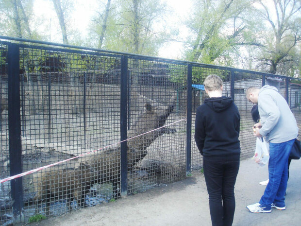"""""""Гниют заживо"""": в запорожском зоопарке устроили концлагерь для животных, - на это невозможно смотреть без слез"""