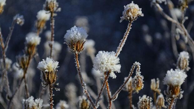 Погода в Днепре на 23 ноября, фото: Днепровская панорама