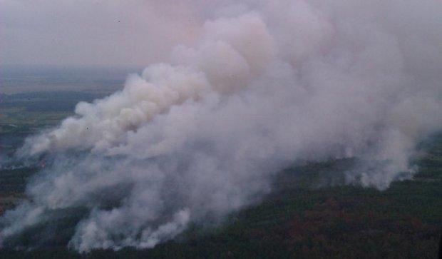 Лесной пожар снова вспыхнул под Киевом
