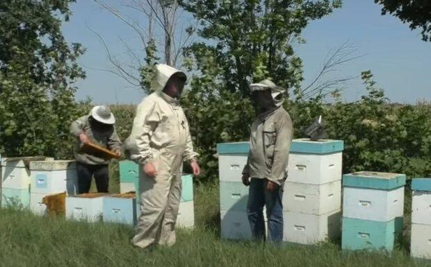 Під Тернополем розлючені бджоли відправили чоловіка в реанімацію