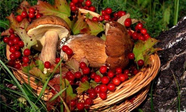 5 самых грибних мест в Украине