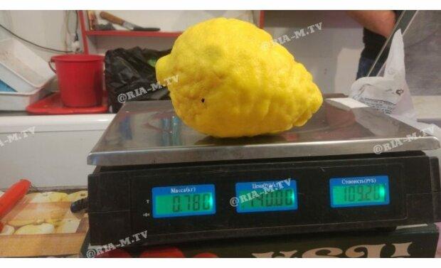 Под Запорожьем выращивают лимоны размером с дыню - как из Чернобыля