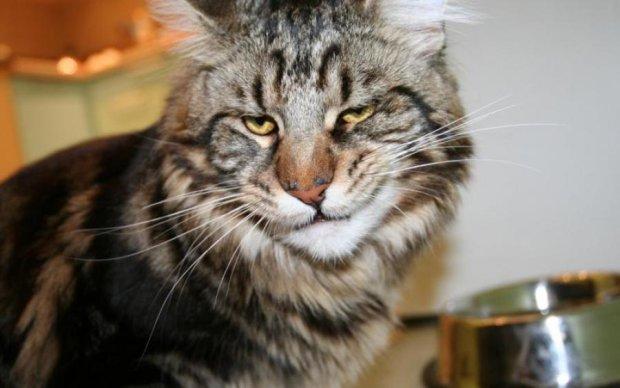 Кіт-гуляка довів двох сусідок до суду
