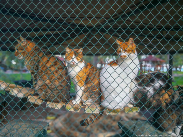 Издевательство над животными дорого обойдется живодерам, что готовит новый закон