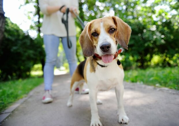Продали на авторинку: пса, якого шукали всім Франківськом, повернули щасливому господареві, - зворушливі фото
