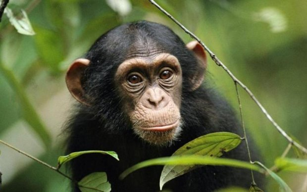 Мавпа без комплексів роздягла туристку: відео