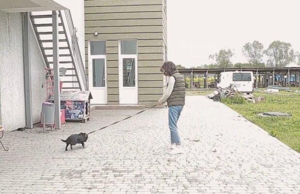 """У Чернівцях голодні собаки виють на все місто, волосся дибки: """"Грошей на їжу немає"""""""
