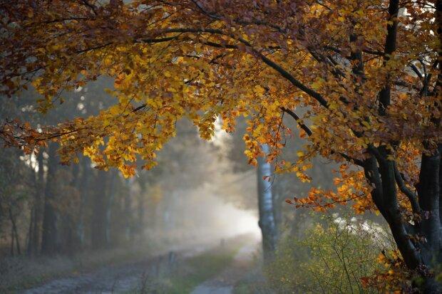 Погода на 17 октября: синоптик рассказала, когда закончится бабье лето