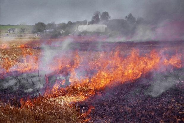 Попкорном запахло: під Києвом пожежа знищила гектари кукурудзи