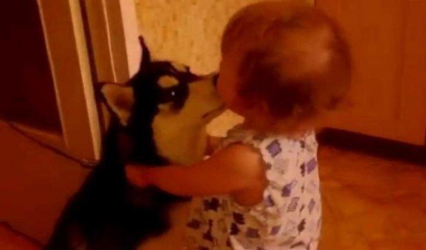 Как хаски за младенцем ползали (видео)