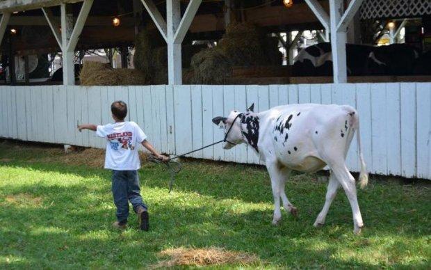 Корова прославила 15-річного хлопця на весь світ